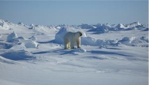 En el Ártico, un piolet puede llegar a ser práctico